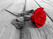 Ketika Mawar Juga Berduri